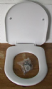Celmac Maestro Soft Close D Shape Toilet Seat - 02001576